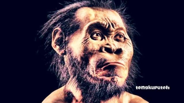 Perkiraan wajah Aneuk Lacoe atau Suku Mante menyerupai manusia purba Homo Naledi