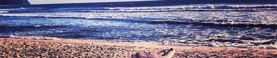 Ingatan seperti sebuah samudera, di balik badai dan gelombang, ada kenangan yang memilih berdamai