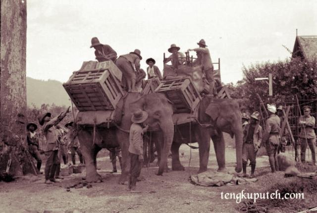 Ekspedisi Pasukan Marsose ke pedalaman Lamlo, Pidie menggunakan sarana transportasi gajah dikarenakan medan yang berat.