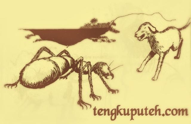 Tempat pertempuran antara semut raksasa (Samudera) melawan anjing milik Meurah Silu (Pasai) menjadi titik pijakan berdirinya Kerajaan Islam Pertama di Asia Tenggara, Kesultanan Samudera Pasai.